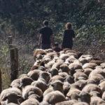 Petits producteurs agricoles