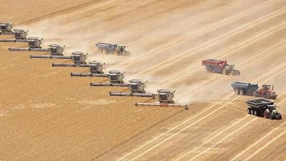 Industrie du blé