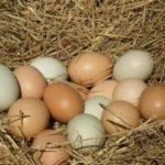 Illustration du profil de L'œuf frais albigeois