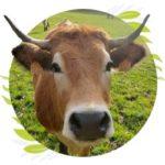 Illustration du profil de La ferme de la Suzari