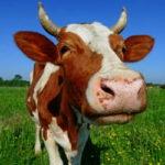 Logo du groupe Éleveurs de bovins